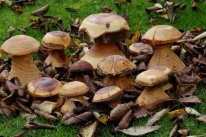 Gemischte Pilze